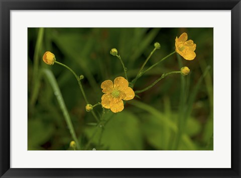 Framed North Shore Yellow Wildflowers Print
