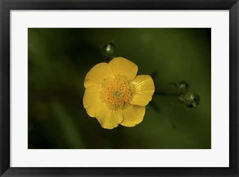 Framed North Shore Yellow Flower Print