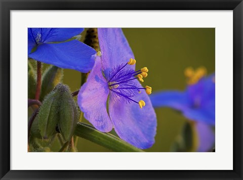 Framed Blue And Purple Flower Blooms Print