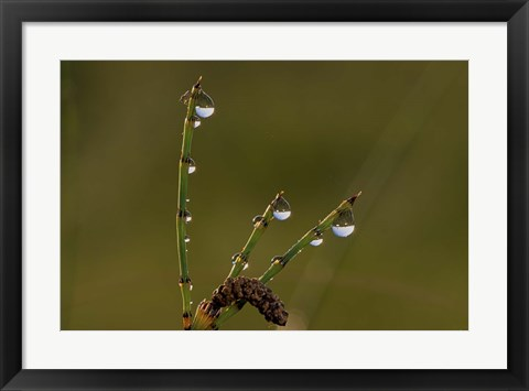 Framed Dew Covered Greenery Triplets Print