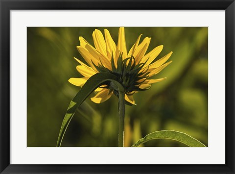 Framed Yellow Wildflower Print