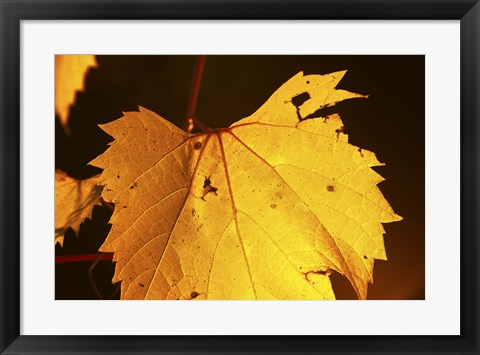 Framed Yellow Fall Leaf Hanging Print