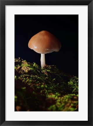 Framed Red Mushroom And Green Moss Print