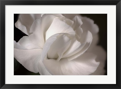 Framed White Flower Closeup Print