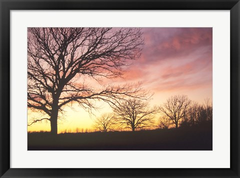 Framed Sunset And Tree Silhouettes I Print