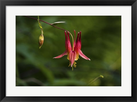 Framed North Shore Red Flower And Branch Print