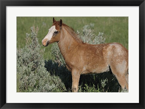Framed Wildhorses 4 Print