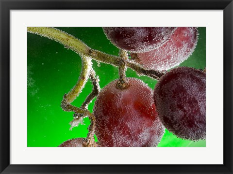 Framed Grapes Covered With Water Drops Print