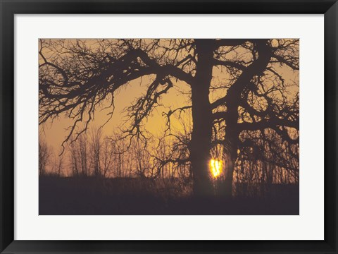 Framed Sunset And Tree Silhouettes III Print