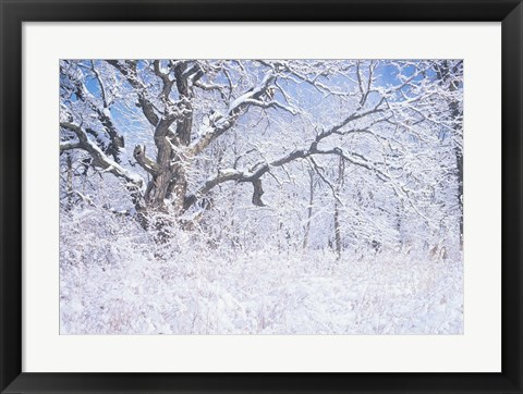 Framed Snow Terrain Tree IV Print