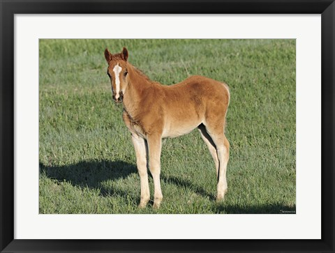 Framed Wildhorses 9 Print