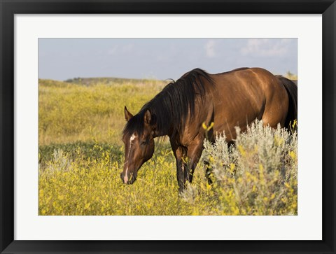 Framed Horse Grazing In Yellow And White Field Print