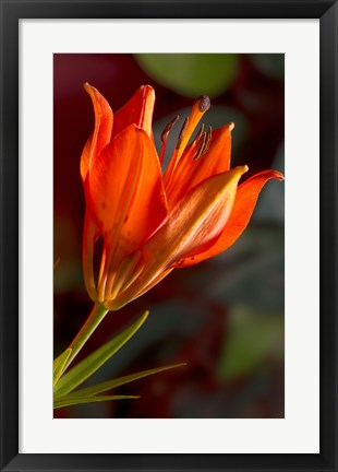 Framed Yellow Sunflower Petals Closeup Print