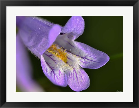 Framed Purple And Yellow Flower On Green Print