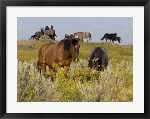 Framed Horses Grazing In Yellow Field II Print