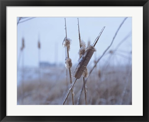 Framed Frosted Cattails I Print