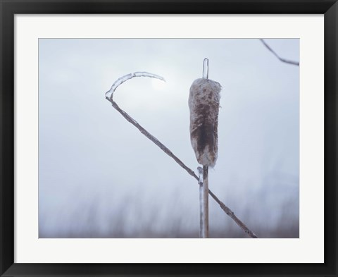 Framed Frosted Cattails II Print