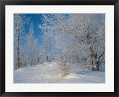 Framed Snow Terrain Tree III Print