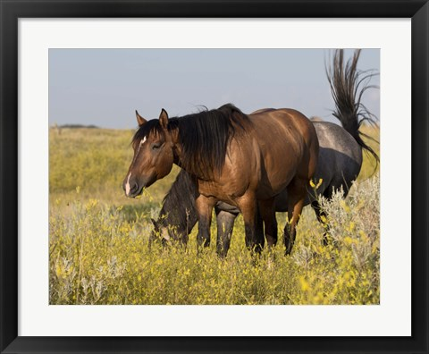 Framed Horses Grazing In Yellow And White Field I Print