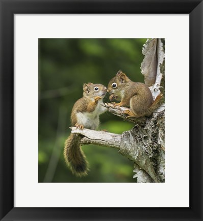 Framed Squirrel Nose Rubbing Print