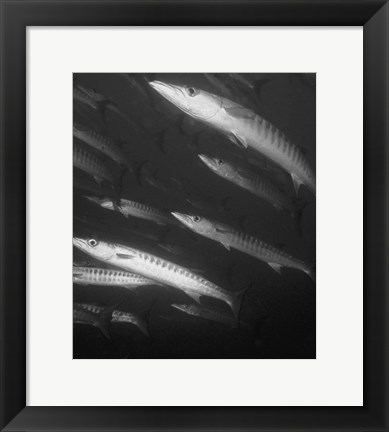 Framed Fish Underwater Black And White Print