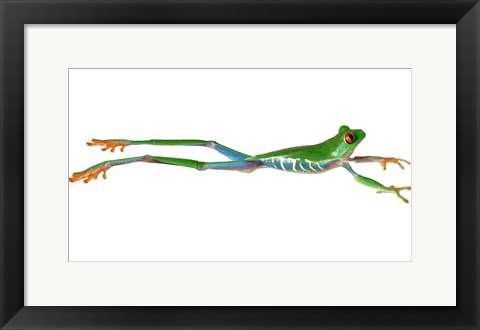 Framed Frog Leap On White I Print