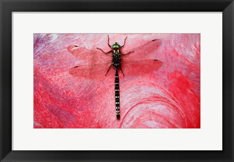 Framed Black Dragonfly On red Print