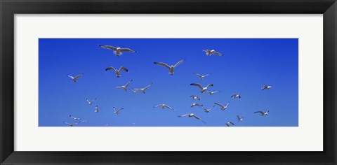 Framed Flock In Flight Print