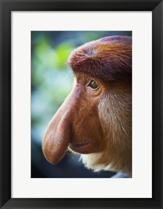 Framed Long-nosed Monkey Print