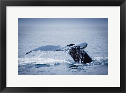 Framed Whale Tail And Sea Print