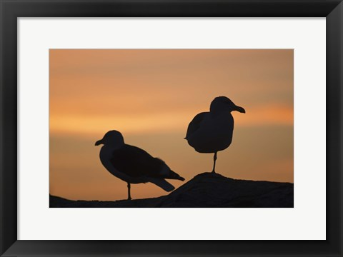 Framed Seagull Silhouettes Print