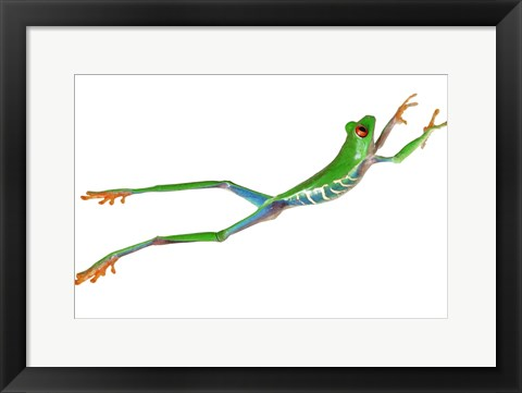 Framed Frog Leap On White II Print
