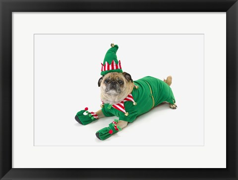Framed Christmas Pug Print