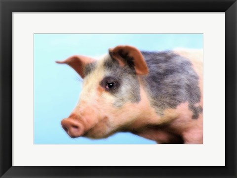 Framed Little Pig Pink And Black Print