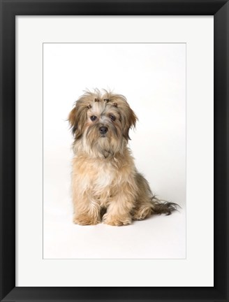 Framed Dog Portrait With Hair Clips Print