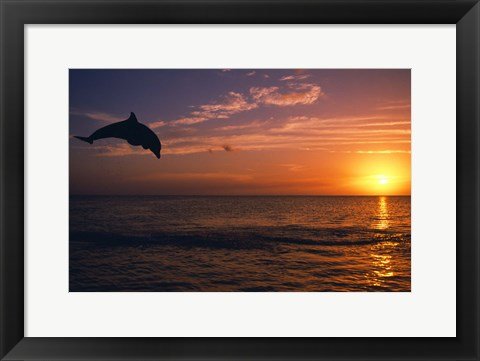 Framed Dolphin Sunset Jump Print
