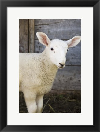 Framed Sheep And Wood Print
