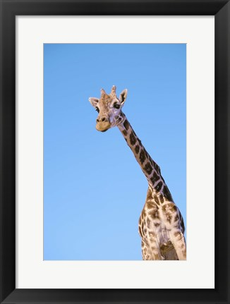 Framed Giraffe And Blue Sky Print