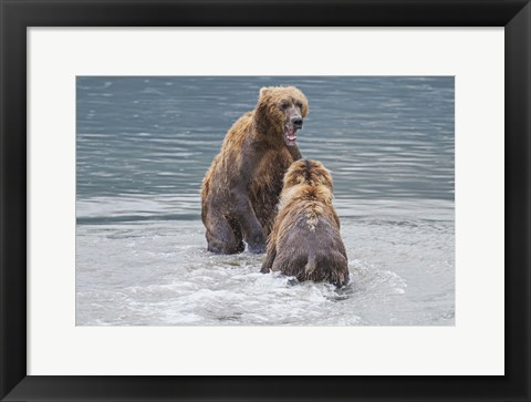 Framed Bears Bathing Print