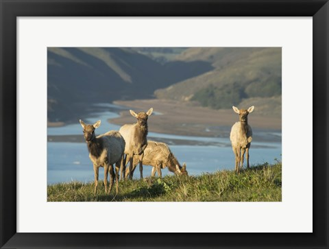 Framed Animals Grazing By The Lake Print