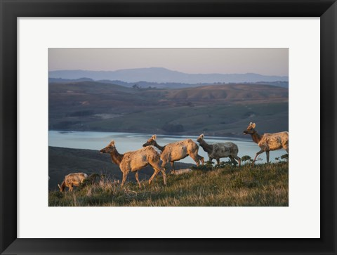 Framed Animals Running By The Lake Print