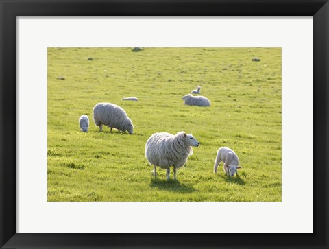 Framed Sheep In The Field Print