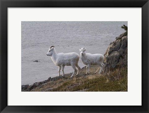 Framed White Fur By The Water Print