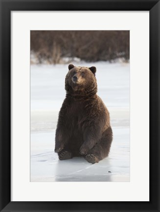 Framed Bear Taking A Seat Print