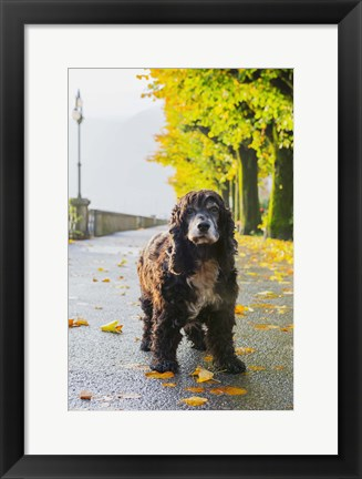 Framed Puppy Prowl On Fall Day Print