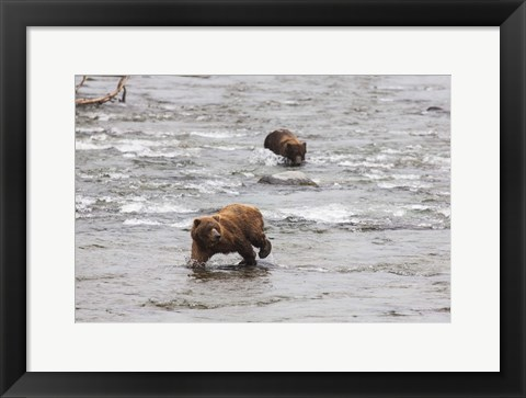 Framed Wet Bear Swim Print