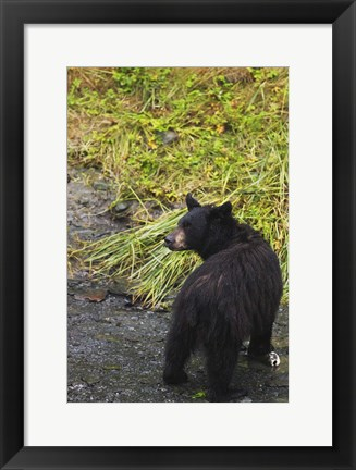 Framed Black Bear Cub And Grass Print