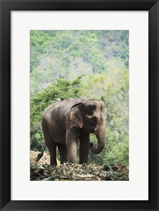 Framed Elephant In The Light Print