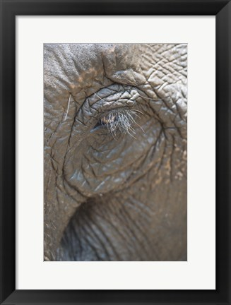 Framed Elephant Lashes Print