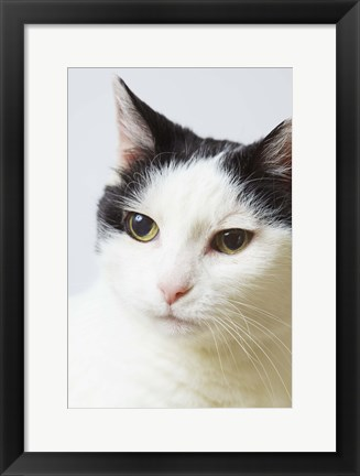 Framed White Cat Contemplation Print